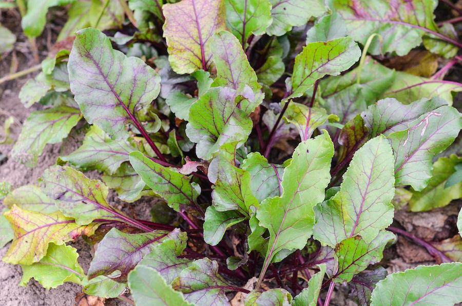 Ekologiczne warzywa