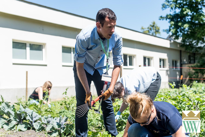 ogród i gotowanie