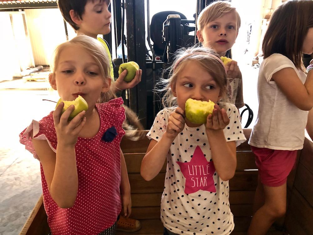 warecki szlak jabłkowy